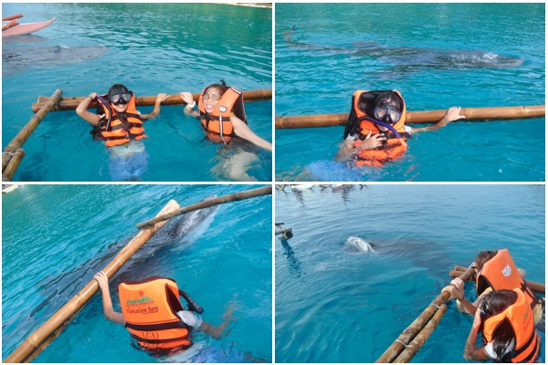 best time to visit this place oslob cebu whale shark watching