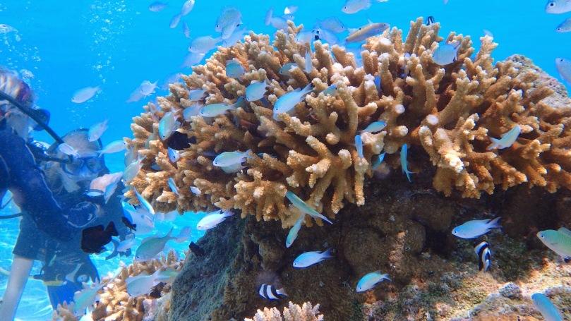 diving-corals