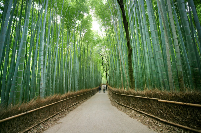Arashiyama Bamboo Grove Kyoto Japan Myfarrahdise Com